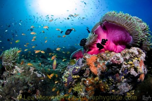 maldives underwater photography by lea moser
