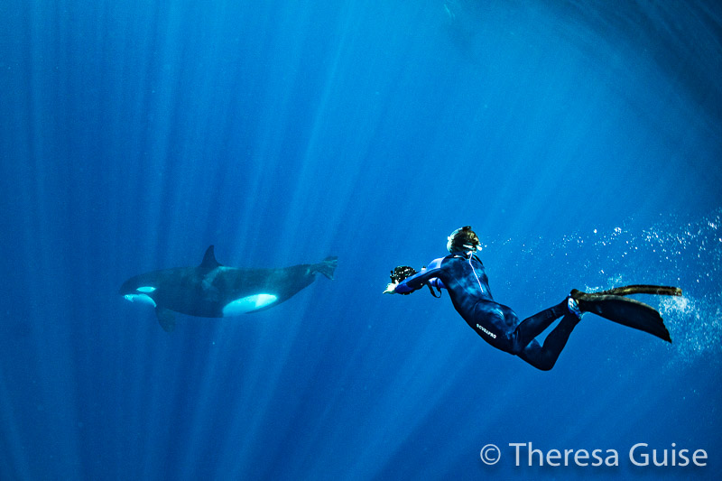 Photographing orcas in Sri Lanka by Theresa Guise