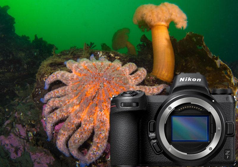 Nikon Z7 Underwater