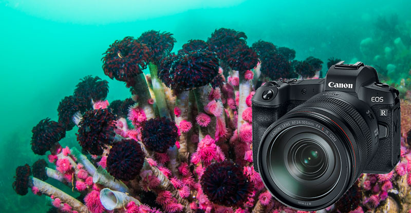 Canon EOS R Underwater