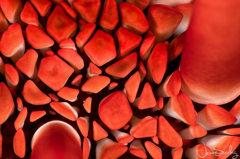 Red Pencil Urchin. Nikon D780, f/32, 1/200, ISO 100 Photo by Jenna Szerlag