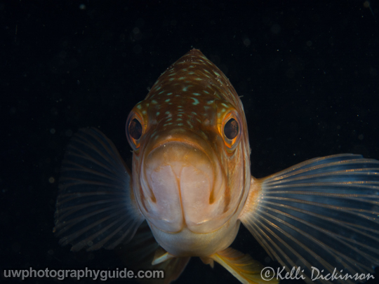 Olympus 60mm Underwater photography Review