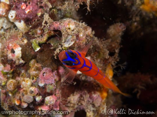 olympus 60mm macro lens underwater photography guide review