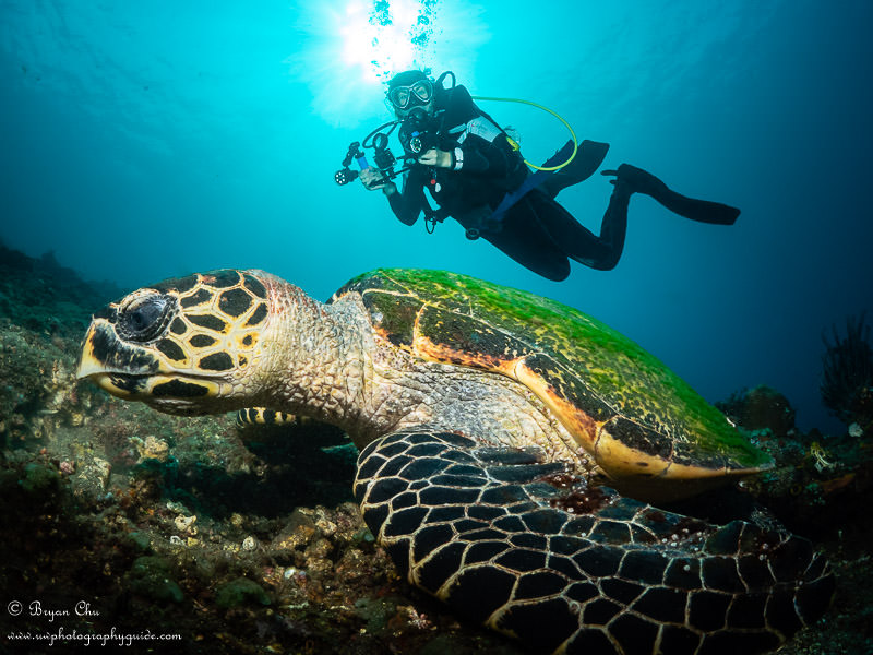Lisa with her my GoPro macro and light setup, behind a hawksbill turtle
