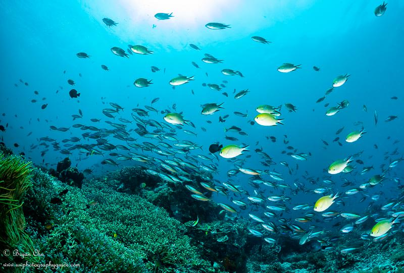 School of colorful fish overtop a reef at Nusa Penida.