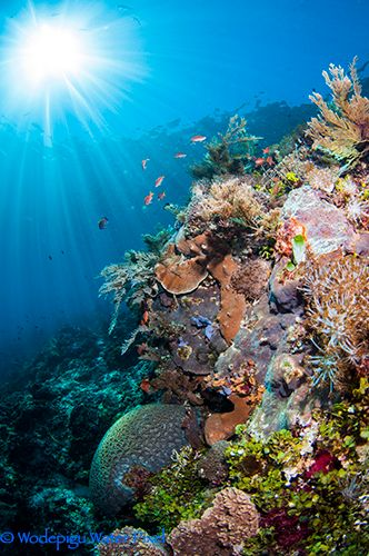 Alor: Indonesia's Secret Gem - Underwater Photography Guide