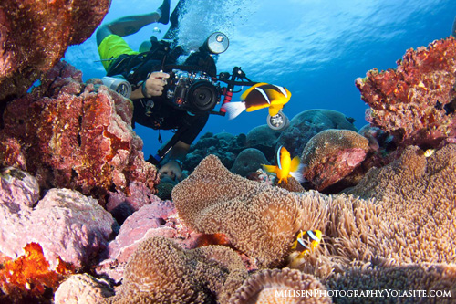 Kosrae Underwater Photography