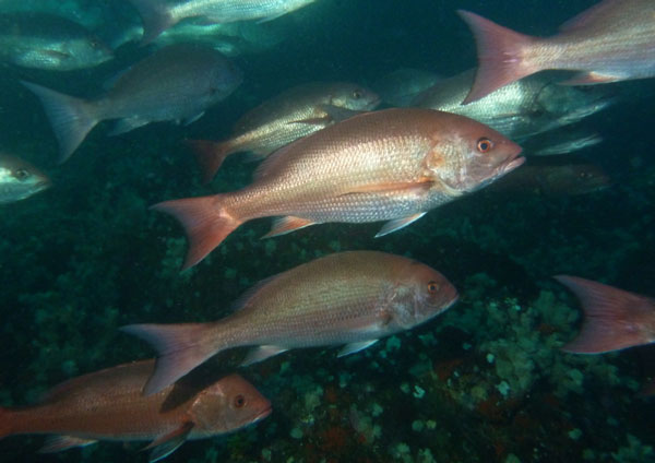 Coiba Island Scuba Diving