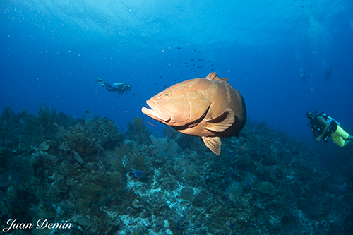 Sony RX-100M2 underwater photo