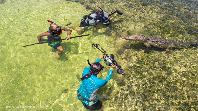 diving with crocs at chincorro