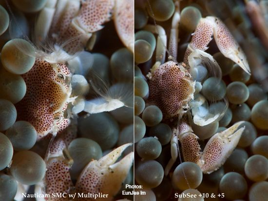 Nauticam SMC Magnifier vs. SubSee +10 +5 Comparison