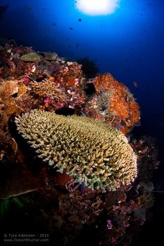 Komodo Reefscape