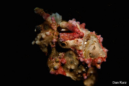 D7100 underwater photo of frogfish