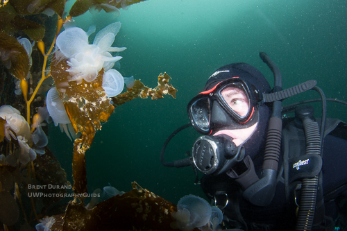Diver & Melibe Nudibranch