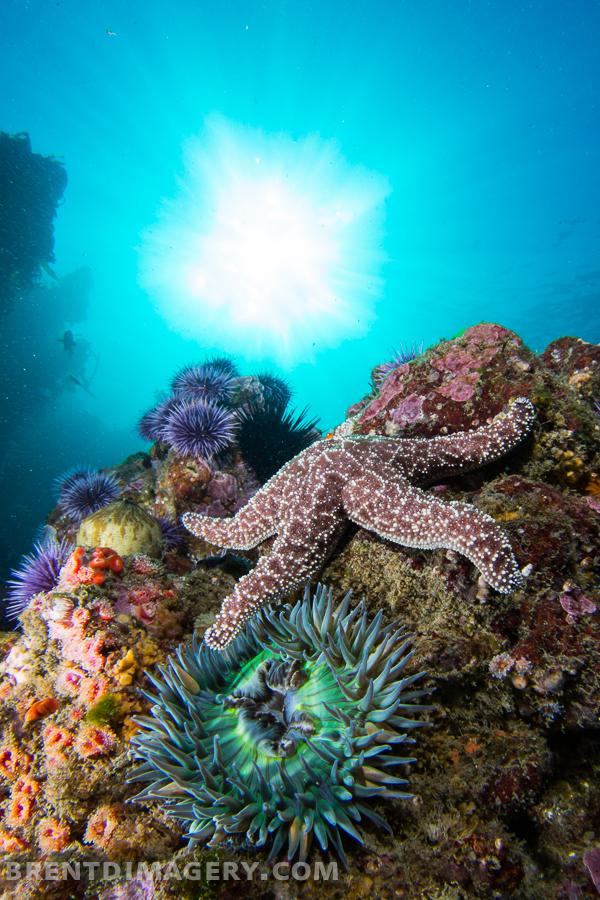 Malibu Reef Scene