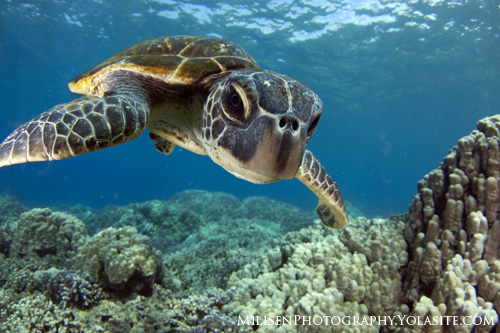 ultimate guide to sea turtle photography underwater photography guide