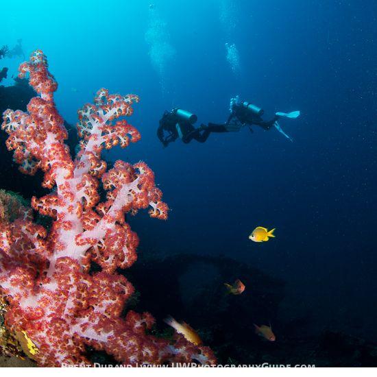 Diver in Scene
