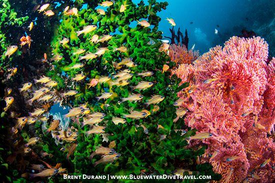 Underwater Reefscape