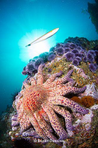 Reef Scene in Malibu