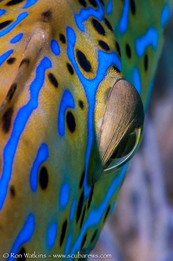 filefish eye
