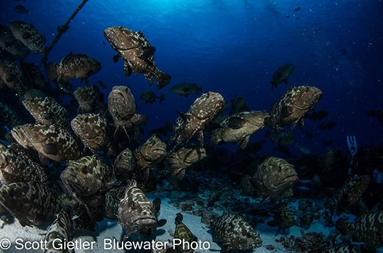 French Polynesia Grouper Spawning Photo Workshop | Bluewater Photo & Travel