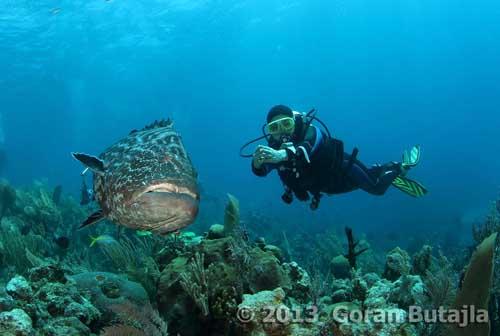 Incredible Shark Diving In Cuba S Jardine De La Reina