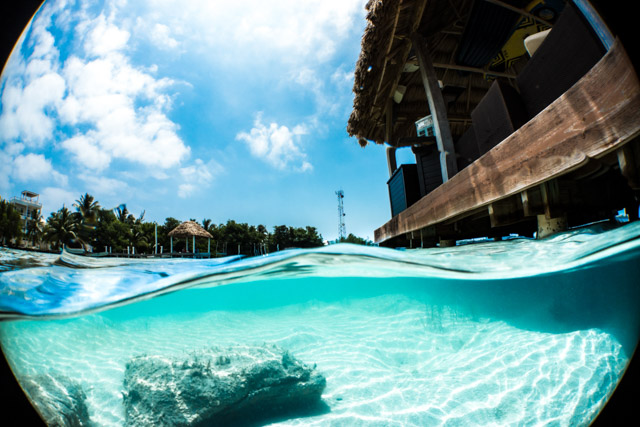 A Photographer's Journey with the Sony RX100 V - Underwater