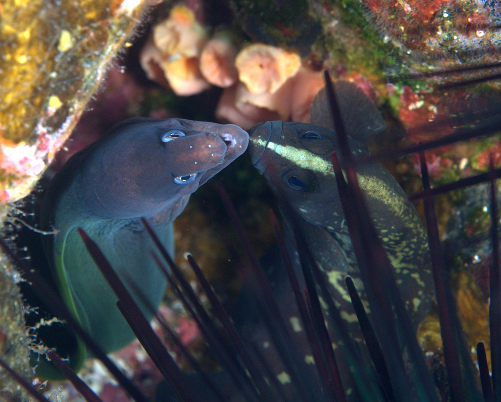 Soapfish