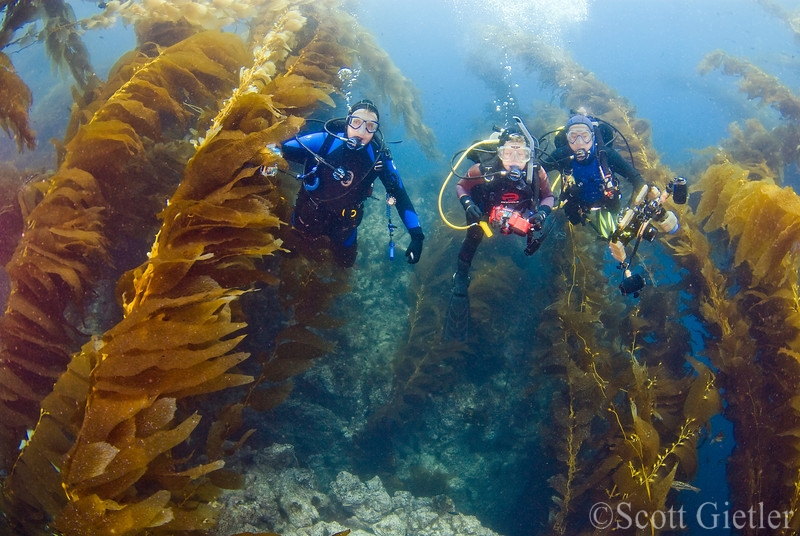 Underwater Photographer S Guide To Navigating The Kelp