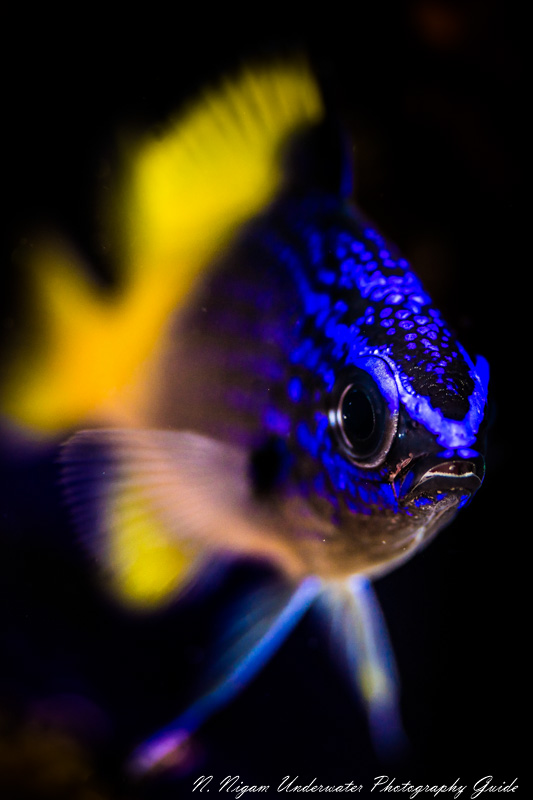 This image is a great example of how you can have nice bokeh in an image with a black background using a snoot. Photo taken with a Sony A7R IV camera, Sony 90mm macro lens, and reefnet fiber optic snoot. f/3.2, ISO 100, 1/200