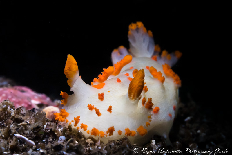 Sony's IBIS allowed us to get crisp photos of this clown dorid in high surge. Photographed with the Sony A7S III, Ikelite A7S III housing, Sigma 105mm macro lens. 1/160, f/22, ISO 320