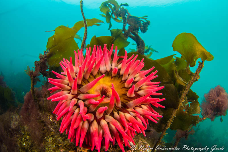 Nikon Z6 and Z7 Camera Review for Underwater Photography