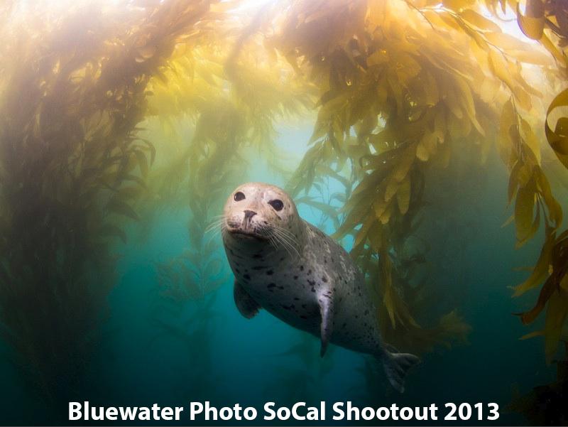 Результаты socal shootout 2013 underwater photo