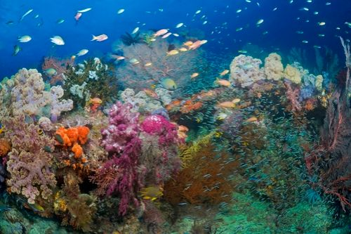 underwater photography in Misool, raja ampat