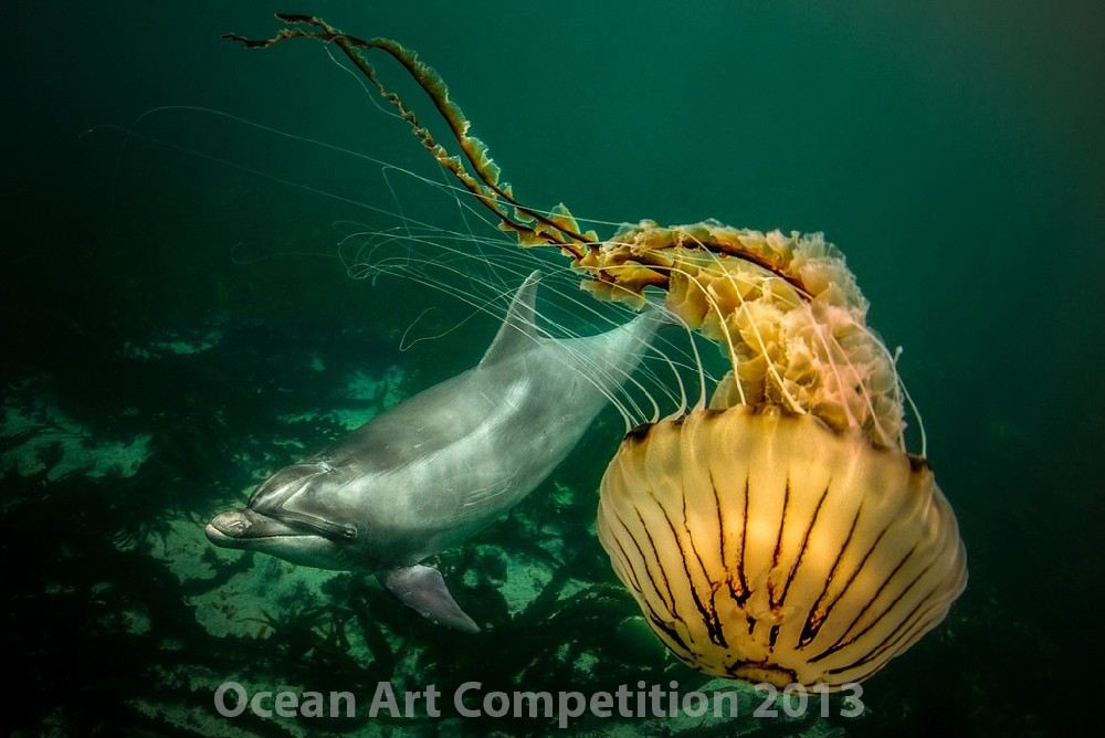 Honorable Mention Cold Water Category|Underwater Photography Guide
