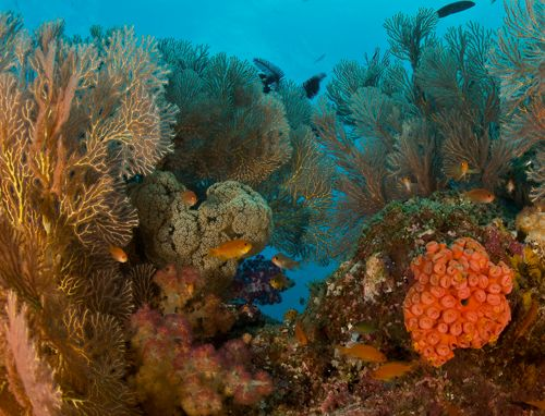 Underwater Photography of coral fish and sea fans in Raja Ampat