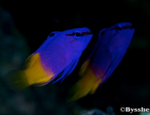 curacao fish photography