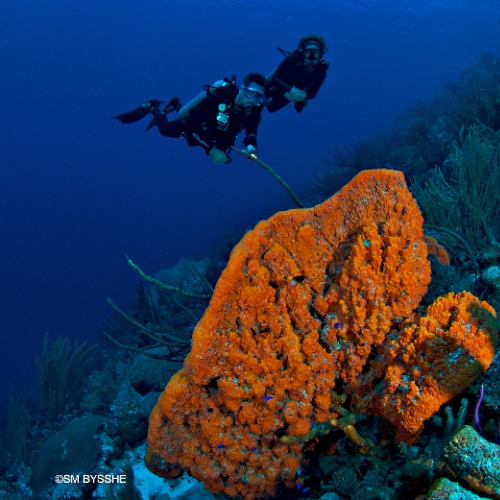 diving Curacao in the sponge forest
