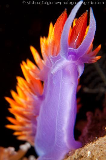 ikelite d90 underwater housing