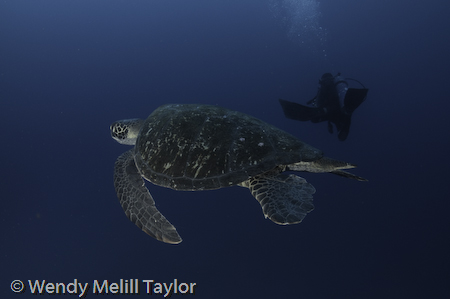 diving Galapagos underwater photography