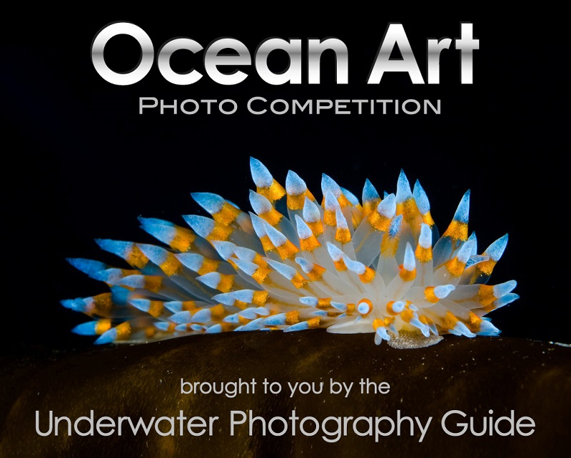 Ocean Art Photo Competition 2014