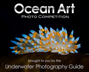 Ocean Art underwater photo competition logo