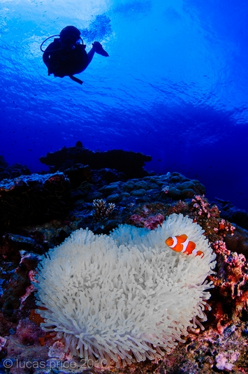 anemone fish underwater photo