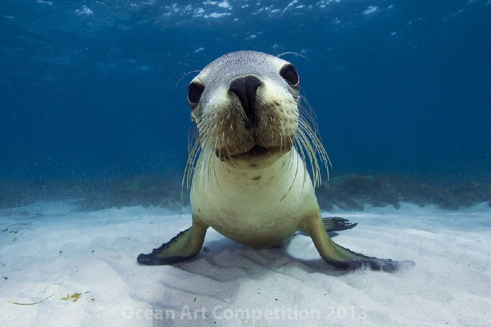 honorable mention portrait category underwater photography guide