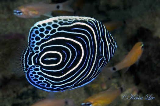 raja ampat underwater photography