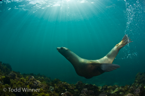 ambient light underwater photography by Todd Winner