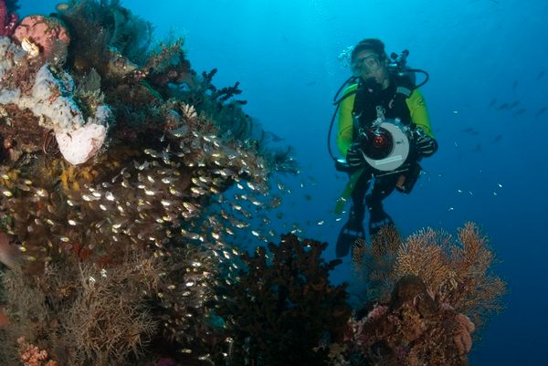 taking underwater video on chicken reef, raja ampat
