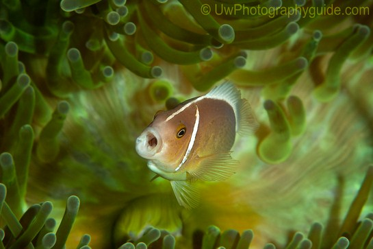 anilao underwater photo workshop winners