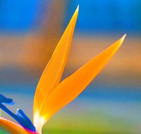bokeh effect with flower