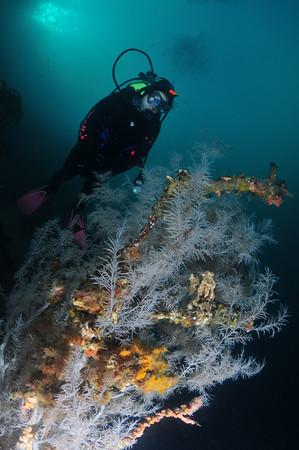 black coral underwater